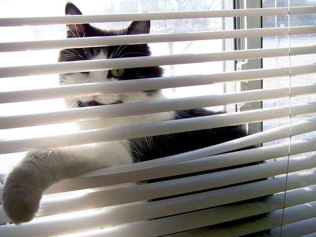cat leaning on Venetian blind