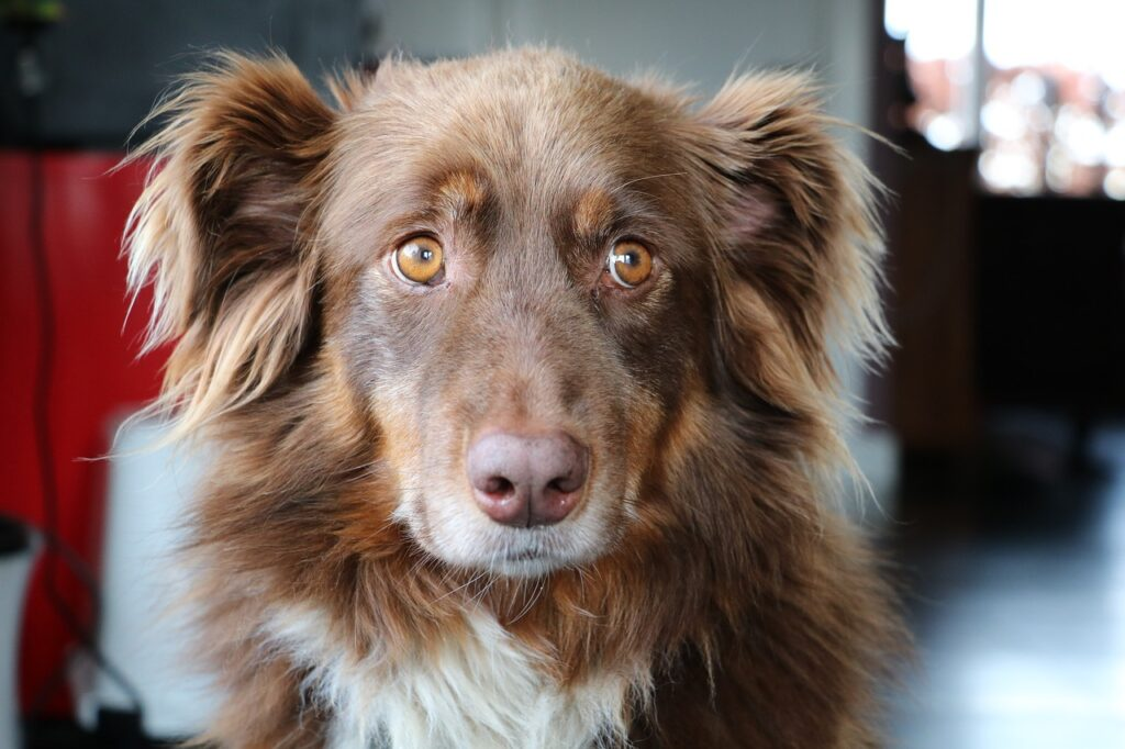 Dog with naughty sad face